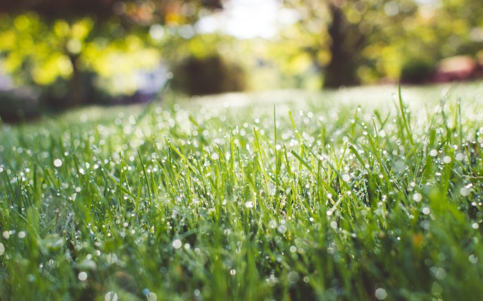 Scientists engineer detoxifying super grass