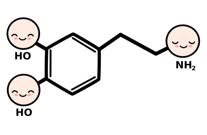 DRUGS, BRAINS, ANDDOPAMINE